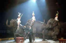 Gibbs Elephants