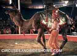 Franzen Bros Circus camel act