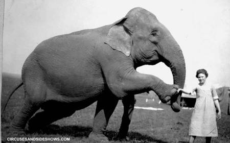 Elephant Modock Patterson Circus 1922