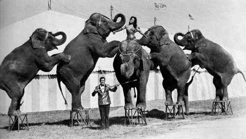 Circus animal trainer Fred Logan