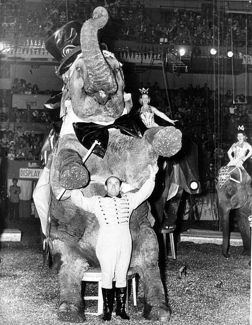 Elephant Trainer Hugo Schmitt