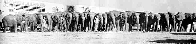 Kelly Miller Circus Elephants 1959