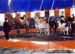 L E Barnes Circus
