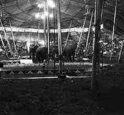 Mills Bros Circus elephant act