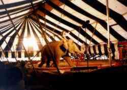 Roberts Bros Circus Elephant Act